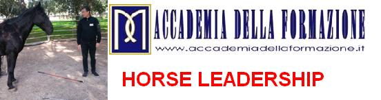 horse-leadership